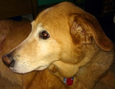 April 2012 - Chloe March 1996-April 2012 RIP